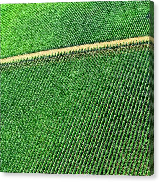 Ag Road Canvas Print