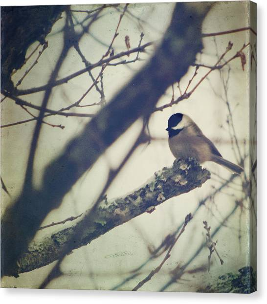 Chickadee Canvas Print - Against The Wind by Amy Tyler