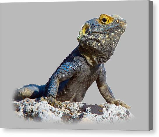 Agama Basking On A Rock T-shirt Canvas Print