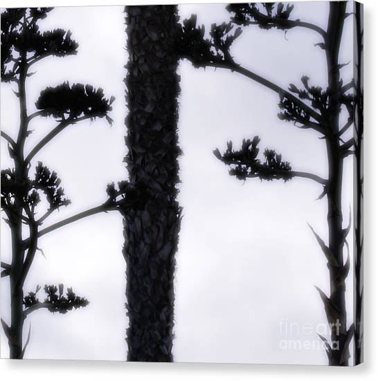 Agave And Palm Canvas Print