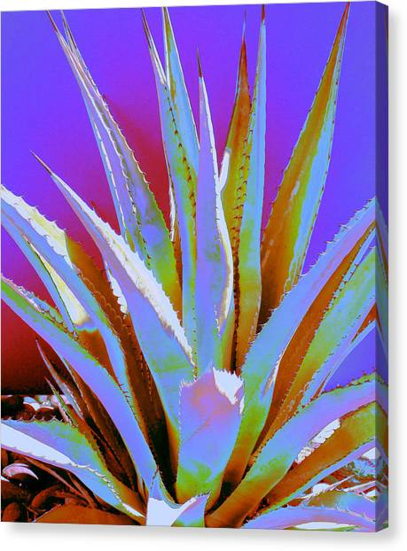 Agave Spirit Canvas Print