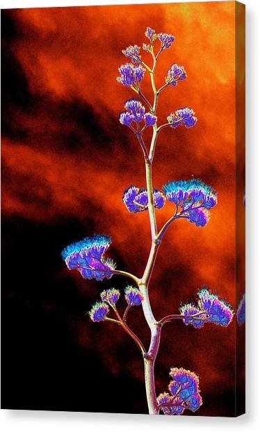 Agave Through Tequila Eyes Canvas Print
