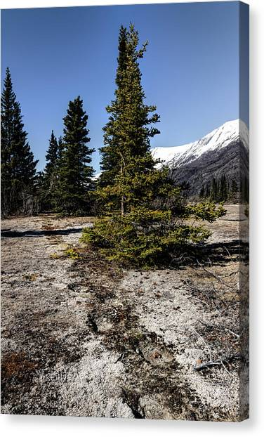 Canvas Print featuring the photograph Age-old Bear Trail by Fred Denner