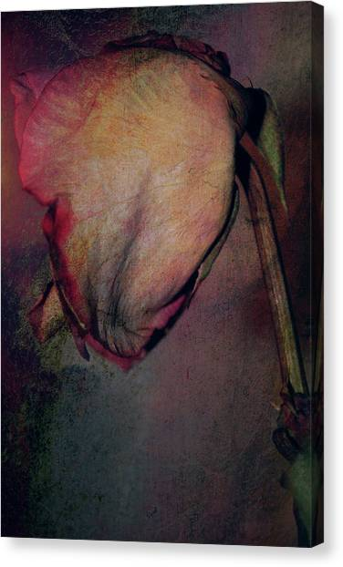 Aging Is Beautiful Canvas Print by Rozalia Toth