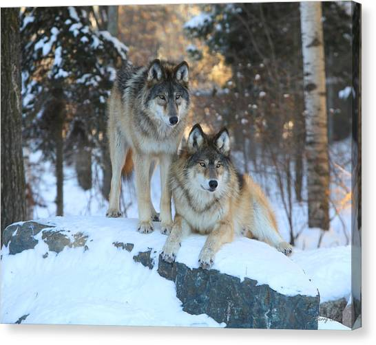 Aidan And Denali-brothers Forever Canvas Print