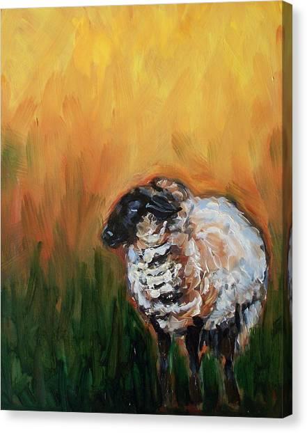 Aiden Canvas Print by Sheila Tajima