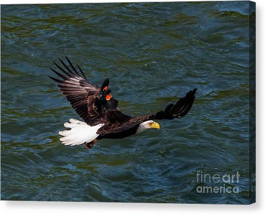 Blackbirds Canvas Print - Air Attack by Mike Dawson