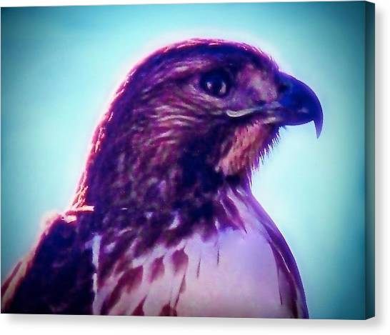 Ak-chin Red-tailed Hawk Portrait Canvas Print