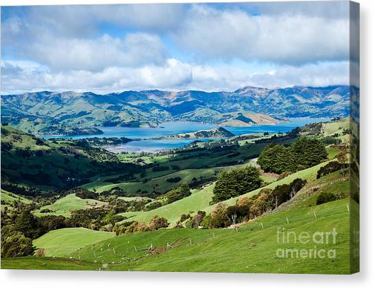Akaroa Harbour Hillsides Canvas Print by John Buxton
