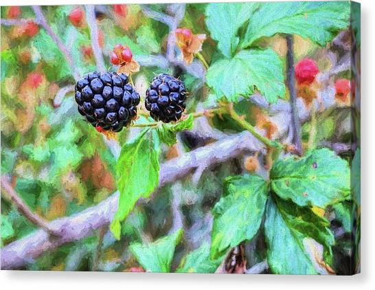 Wild Berries Canvas Print - Alabama Blackberries by JC Findley