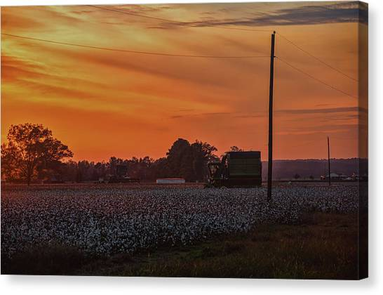 Alabama Cotton Fields Canvas Print