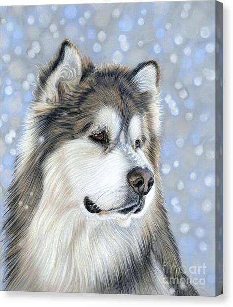 Canvas Print featuring the mixed media Alaskan Malamute by Donna Mulley