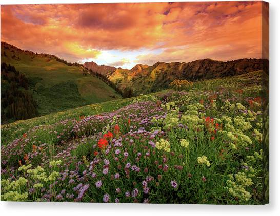 Albion Basin Golden Sunrise Canvas Print