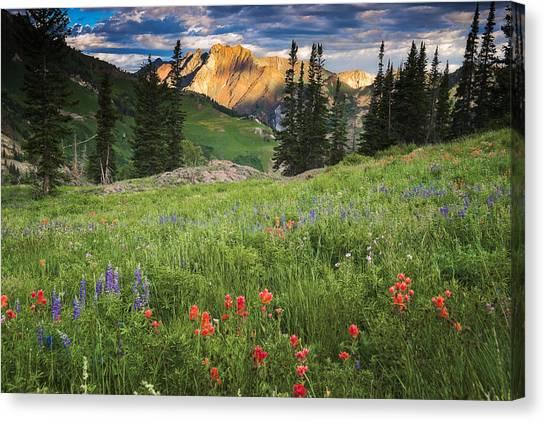 Albion Basin Wildflowers Canvas Print