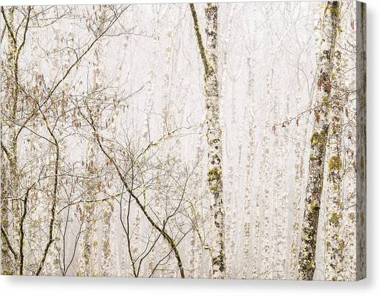 Alders In The Fog Canvas Print