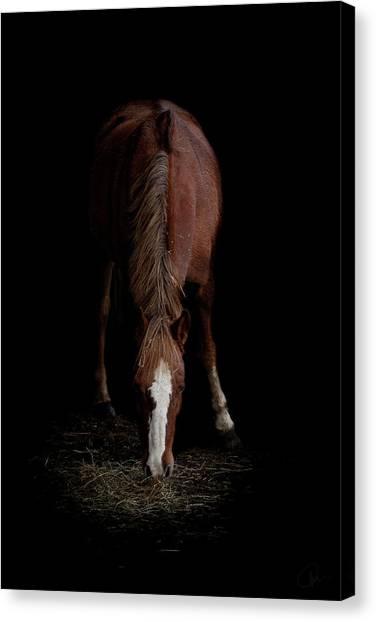 Ponies Canvas Print - Alfresco by Paul Neville