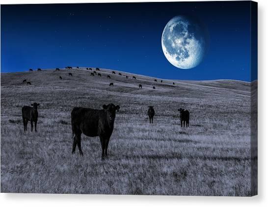 Angus Steer Canvas Print - Alien Cows by Todd Klassy