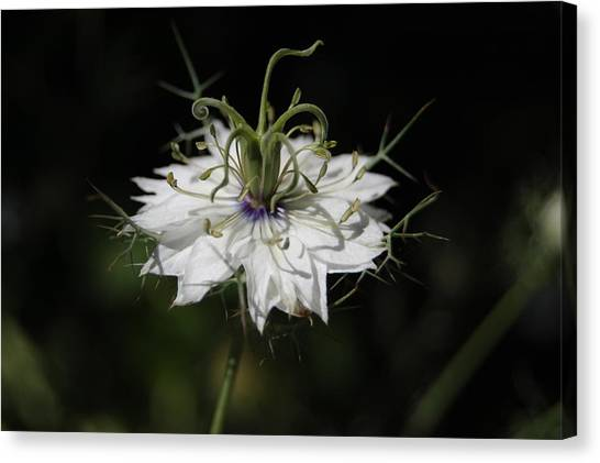 Alien Flower Canvas Print by Jean Booth