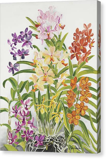 Alis Orchids Canvas Print by Anji Worton