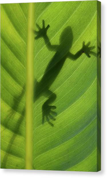 Lizards Canvas Print - Alive by Dan Holm