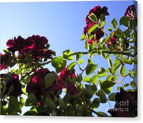 All About Roses And Blue Skies I Canvas Print by Daniel Henning