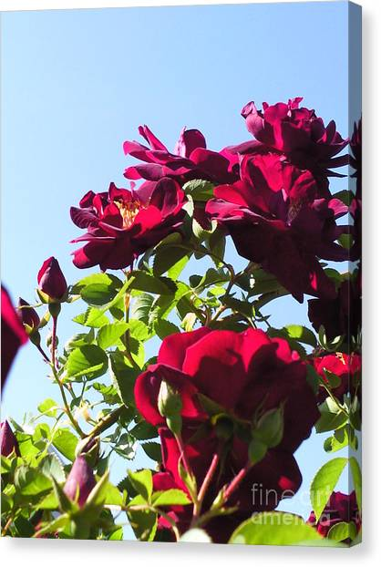 All About Roses And Blue Skies Ix Canvas Print by Daniel Henning