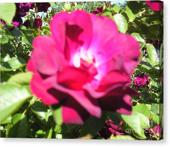 All About Roses And Green Leaves I Canvas Print by Daniel Henning