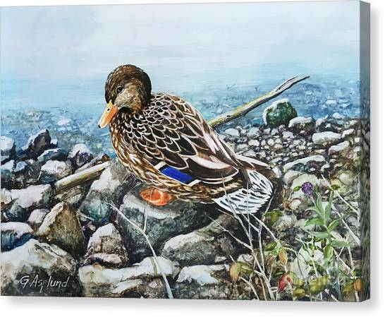 Resting Duck Canvas Print