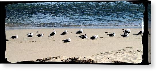 All My Gulls In A Row Canvas Print by Ellen Lerner ODonnell