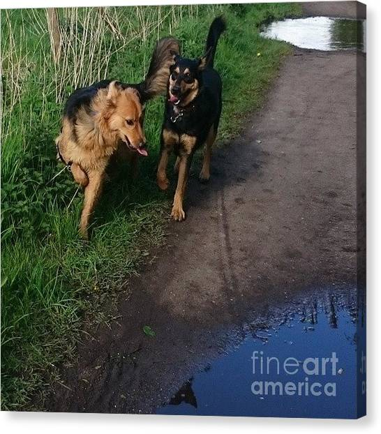 Gsd Canvas Print - All Play And No Work! #dogs #gsd by Abbie Shores
