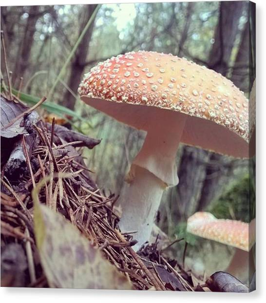 Vegetables Canvas Print - Alle Unter Einem Hut.  #mushrooms by Mandy Tabatt