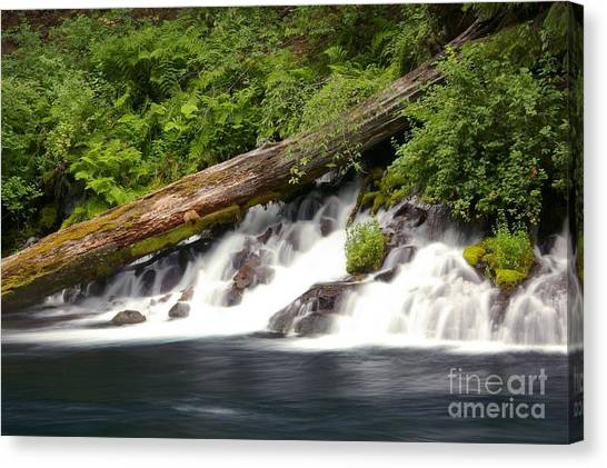 Allen Springs On The Metolius River Canvas Print