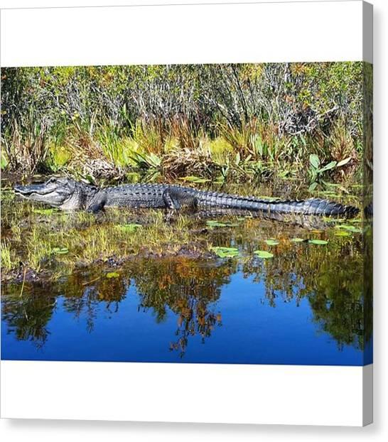 Okefenokee Canvas Print - Alligator In The Okefenokee #swamp by Karen Breeze