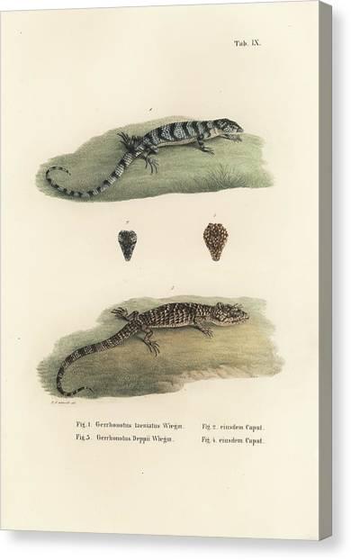 Alligator Lizards Canvas Print