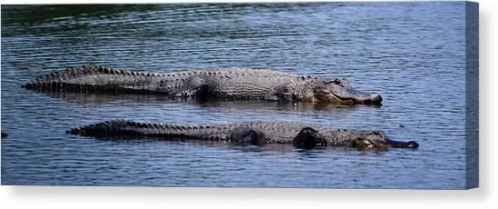 Alligator Pair Canvas Print
