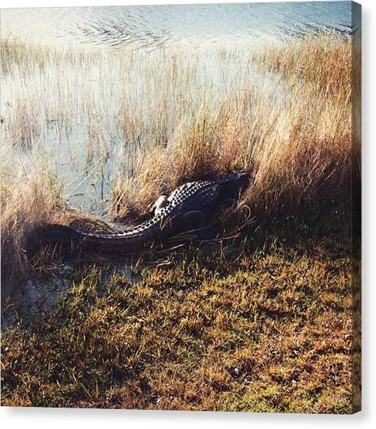 Everglades Canvas Print - #alligator #sharkvalley #florida by Aurore Pizzo