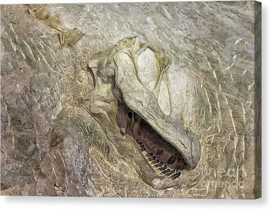 Camarasaurus Canvas Print