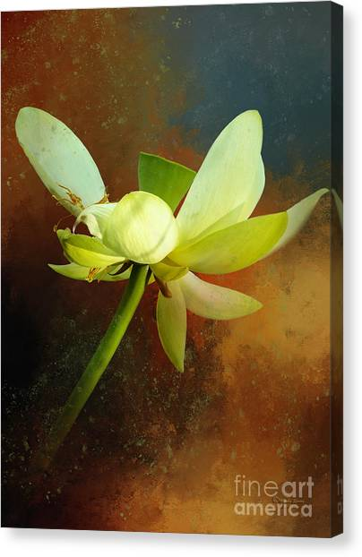 Blossom Canvas Print - Almost Done by Marvin Spates