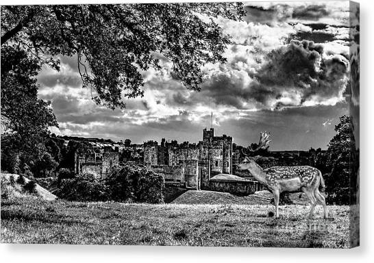 Alnwick Castle And Fallow Deer Canvas Print