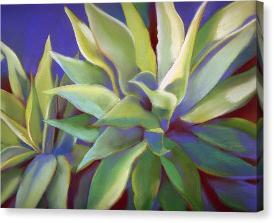 Aloe Plants In Big Sur Canvas Print