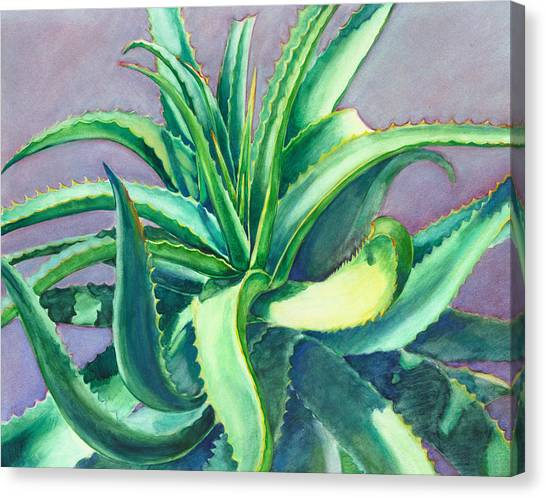 Aloe Vera Watercolor Canvas Print