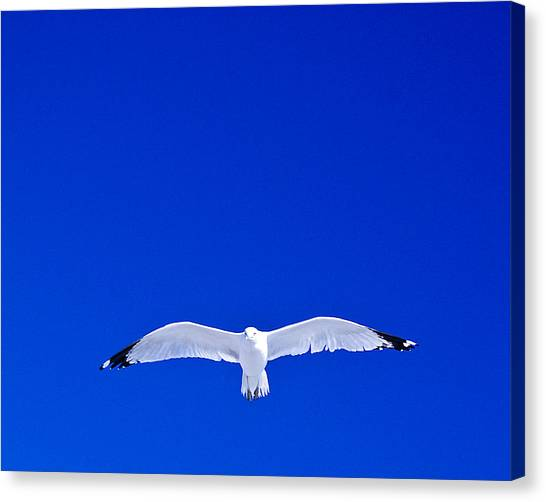 Alone Canvas Print by William Bray