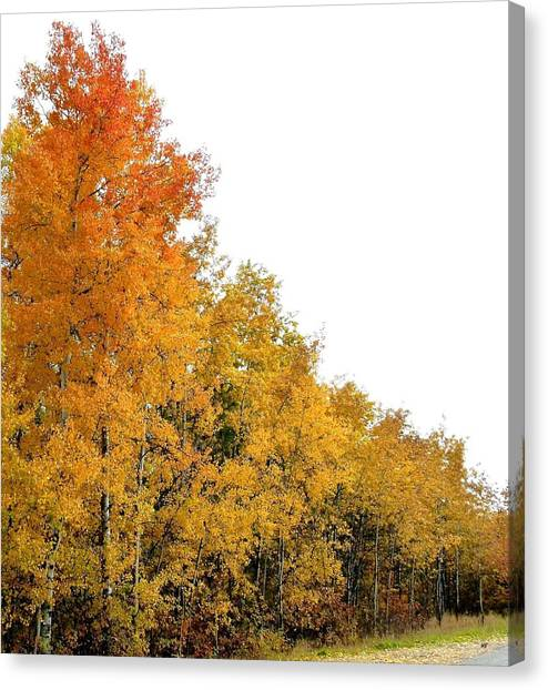 Oyama Canvas Print - Along Broadwater Road by Will Borden