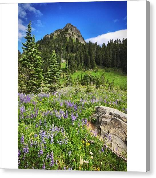 Washington Canvas Print - Along The Trail #enlight #mtrainier by Joan McCool