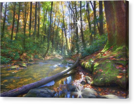 Along The Trail In Georgia Canvas Print
