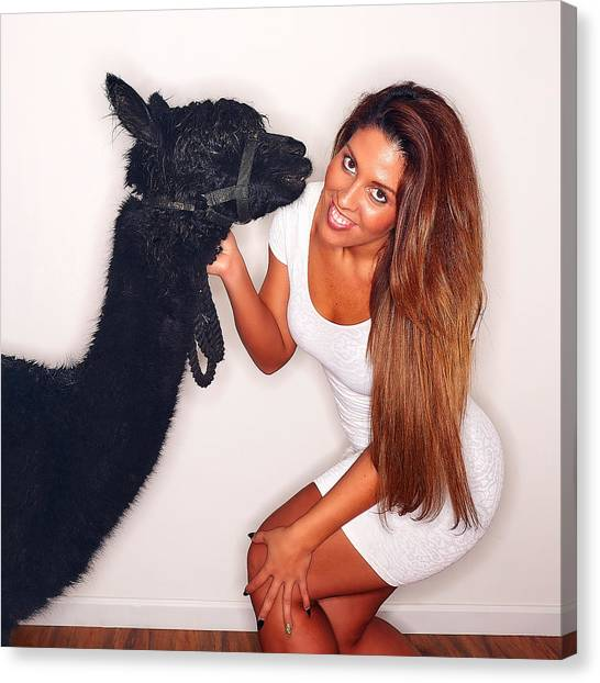 Alpaca Emily And Breanna Canvas Print