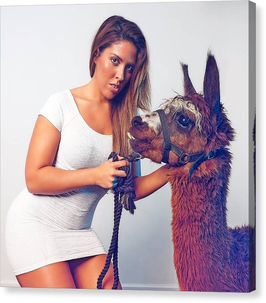 Alpaca Mr. Tex And Breanna Canvas Print