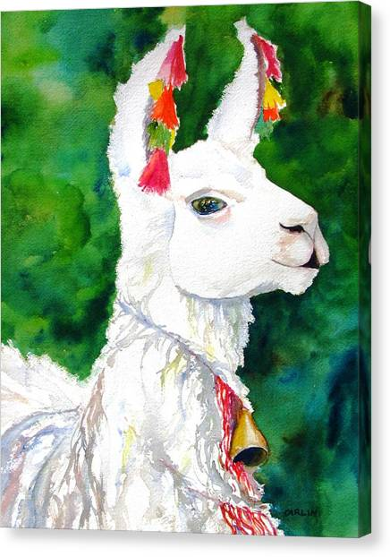 Peruvian Canvas Print - Alpaca With Attitude by Carlin Blahnik CarlinArtWatercolor