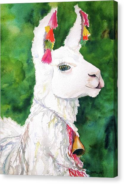 Alpaca With Attitude Canvas Print