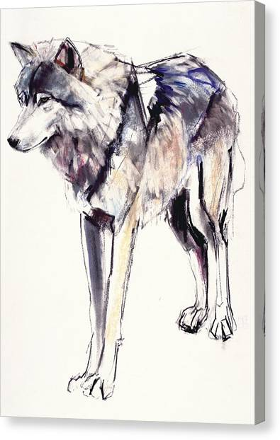 Wolves Canvas Print - Alpha by Mark Adlington